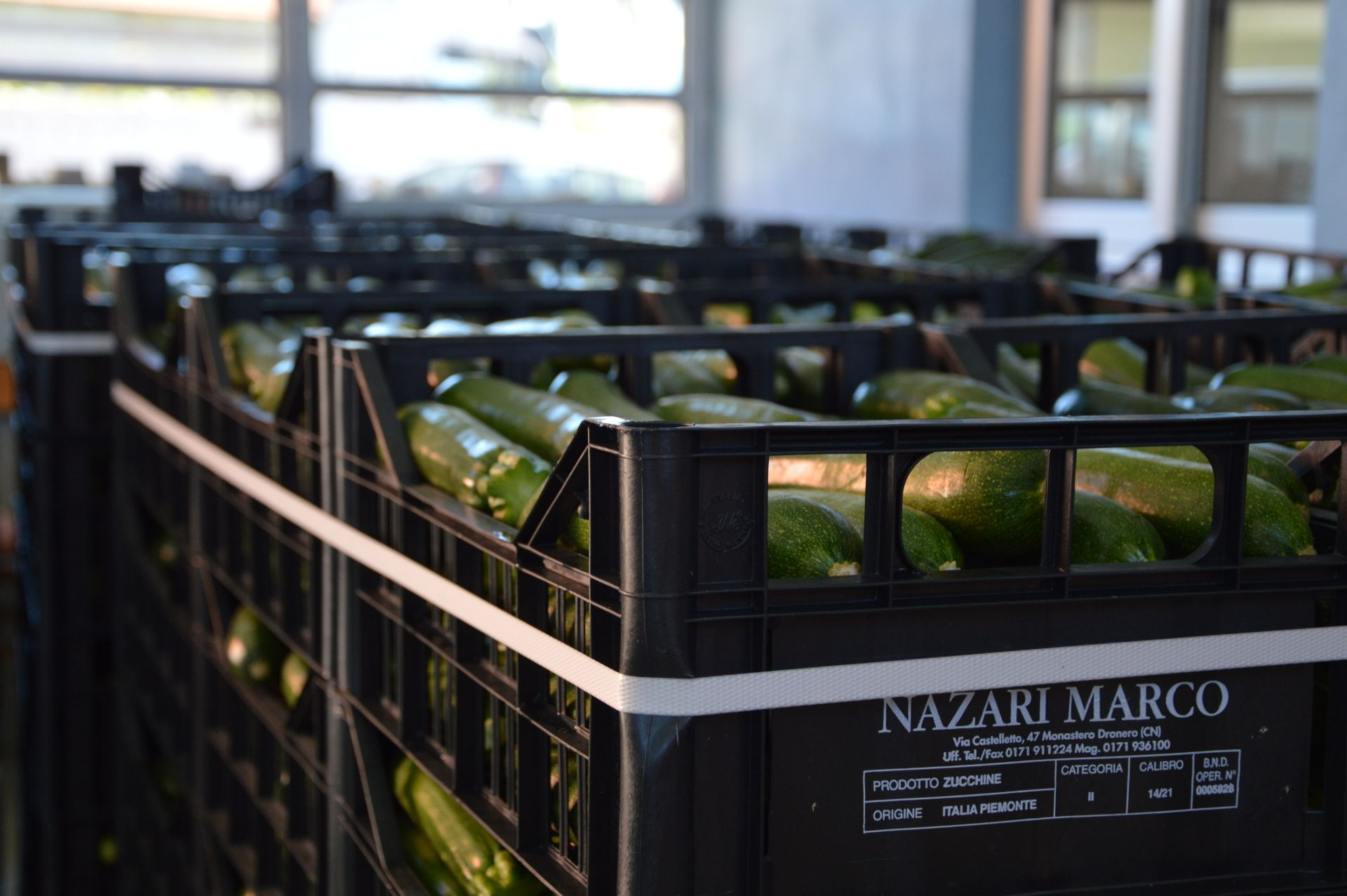 Zucchine di Nazari Ortofrutta